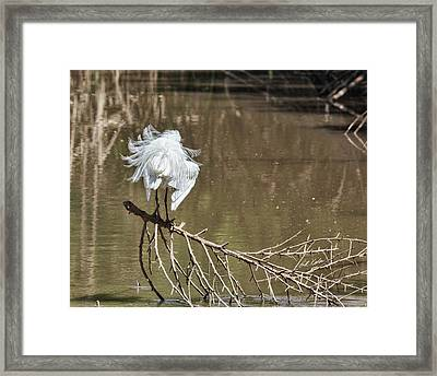 Framed Print featuring the photograph Fluff Time by Bill Kesler