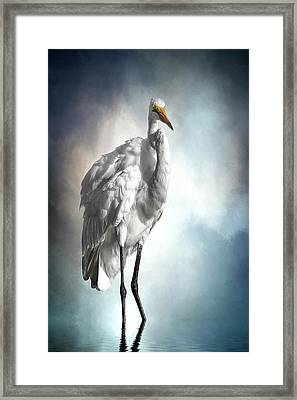 Fluffed And Plumped Framed Print