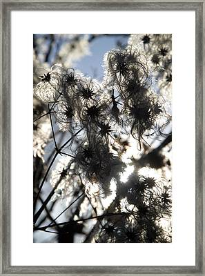 Fluffed Up And Ready To Take Off Framed Print by Jez C Self