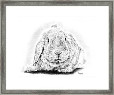 Fluffy Bunny Framed Print