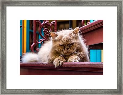 Fluffy Cat Framed Print