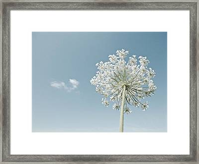Fluffy Cloud Framed Print
