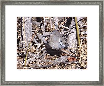 Framed Print featuring the digital art Fluffy Dove by Deleas Kilgore