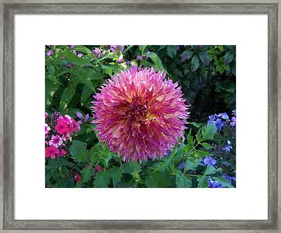 Fluffy Flower Framed Print by Colleen Neff