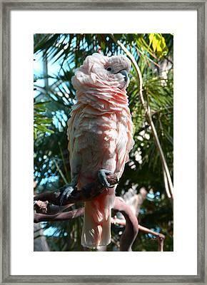 Fluffy Framed Print by Marketa Kostrova