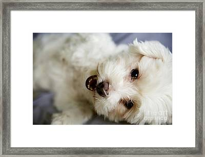 Fluffy Puppy Framed Print