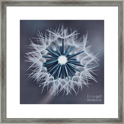 Fluffy Sun - 29bld2cr Framed Print by Variance Collections