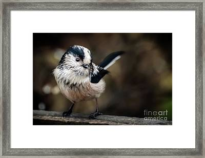 Fluffy The Long-tailed Tit  Framed Print