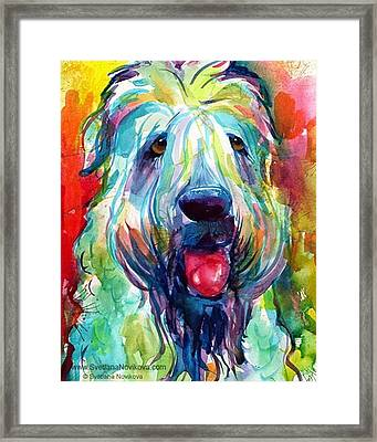 Fluffy Wheaten Terrier Portrait By Framed Print