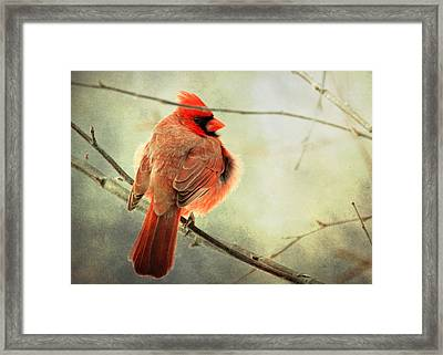 Fluffy Winter Cardinal Framed Print