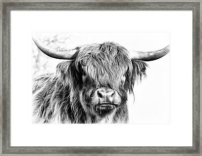 Fluffys Big Brother  Framed Print by Tim Gainey