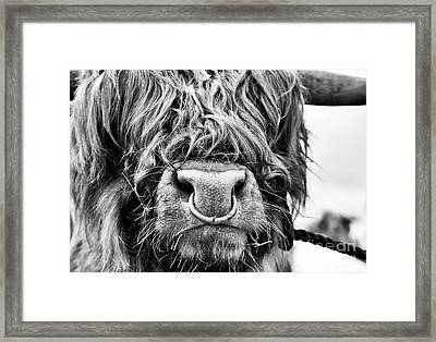 Framed Print featuring the photograph Fluffys Grumpy Uncle by Tim Gainey