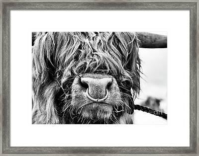 Fluffys Grumpy Uncle Framed Print