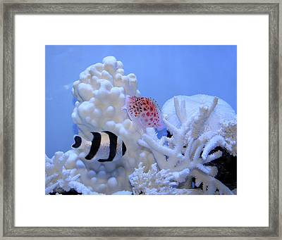 Fluid Fish Painting Framed Print