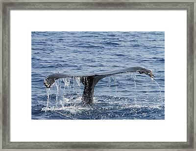 Fluke  Framed Print by Shoal Hollingsworth
