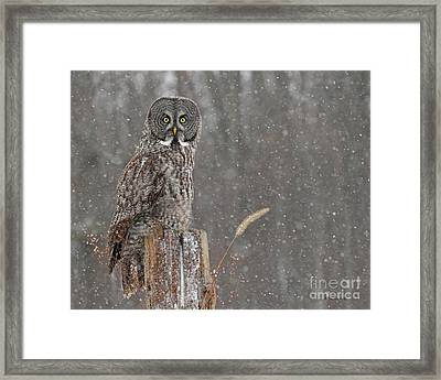 Flurries In The Forecast Framed Print by Heather King
