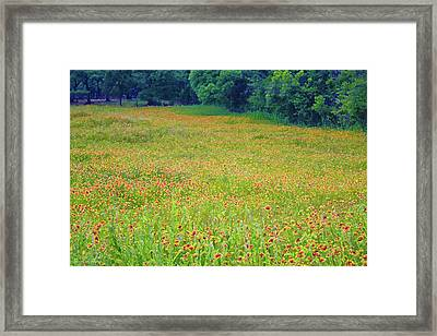Flush With Flowers Framed Print