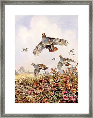 Flushed Partridges Framed Print
