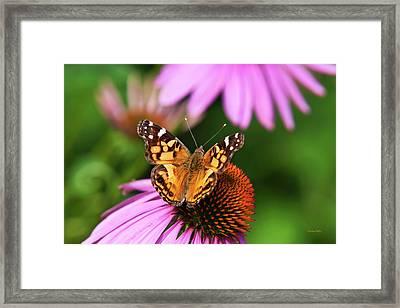 Fluttering Breeze Butterfly Framed Print by Christina Rollo