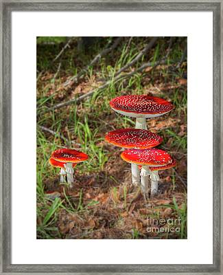 Fly Agaric Amanita Muscaria Framed Print