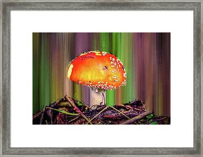 Framed Print featuring the photograph Fly Agaric #g7 by Leif Sohlman