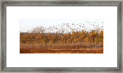 Fly Away Home Framed Print by Elizabeth Winter