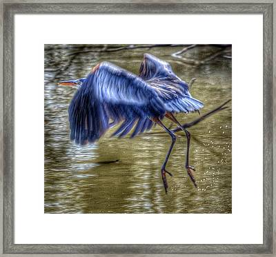 Fly Away Framed Print by Sumoflam Photography