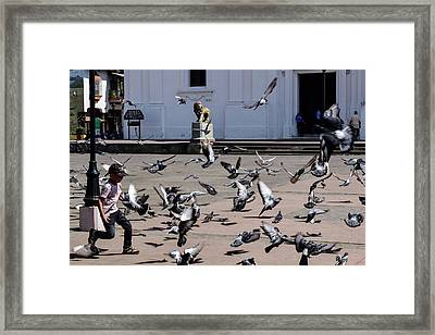 Fly Birdies Fly Framed Print