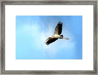 Fly By 2 Framed Print