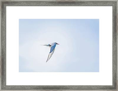 Fly-by Framed Print by Emily Bristor