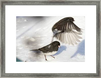 Framed Print featuring the photograph Fly By by Gary Wightman