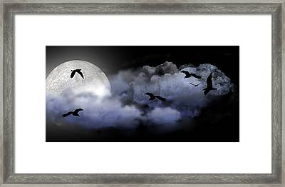 Fly By Night Framed Print by Evelyn Patrick
