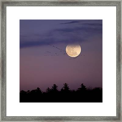 Fly By Night Square Framed Print by Bill Wakeley