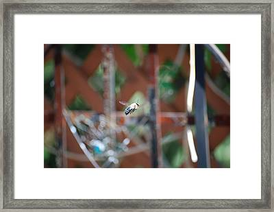 Fly By Framed Print by Peter  McIntosh