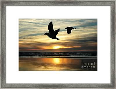 Fly Bye Framed Print