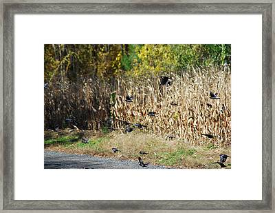 Fly For It Framed Print by Clay Peters Photography