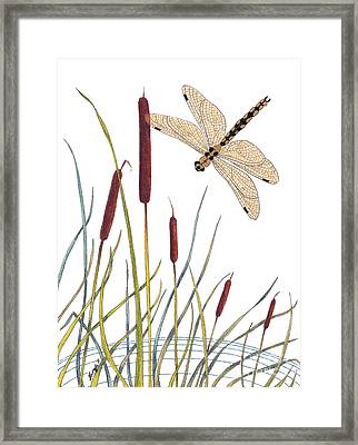 Fly High Dragonfly Framed Print