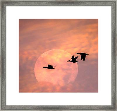Fly High Moon Geese Square Framed Print by Terry DeLuco