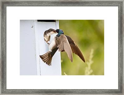 Fly In Meal Framed Print by Carl Jackson