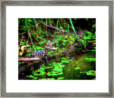 Fly Into My Mouth Please Framed Print by Mark Andrew Thomas