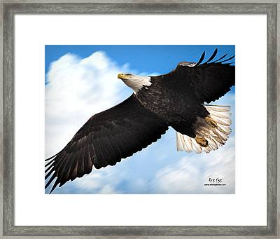Fly Like An Eagle Framed Print by Rick Fisk