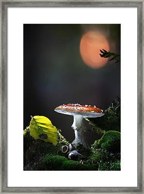 Fly Mushroom - Red Autumn Color Framed Print