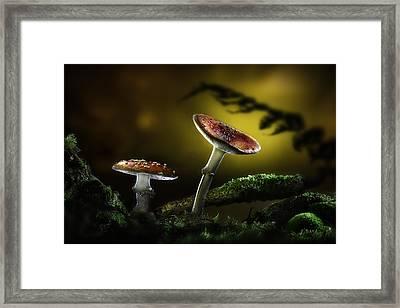 Fly Mushroom - Red Autumn Colors Framed Print by Dirk Ercken