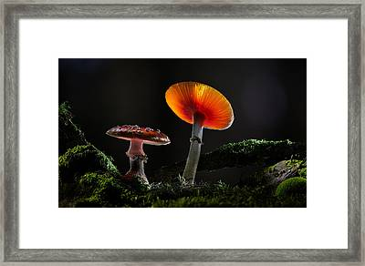 Fly Mushrooms - Red Autumn Colors Framed Print by Dirk Ercken