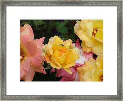 Fly On The Roses Framed Print by Terry  Wiley