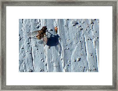 Framed Print featuring the photograph Fly On The Wall by Betty Northcutt