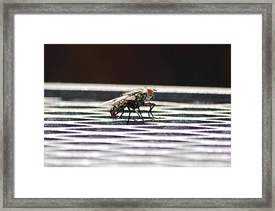 Fly Framed Print by Peter  McIntosh