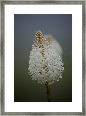 Fly Poison Framed Print by Christina Durity