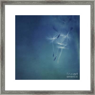 Fly Framed Print by Priska Wettstein