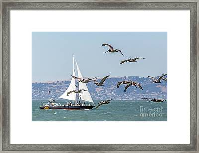 Flyby Framed Print by Kate Brown